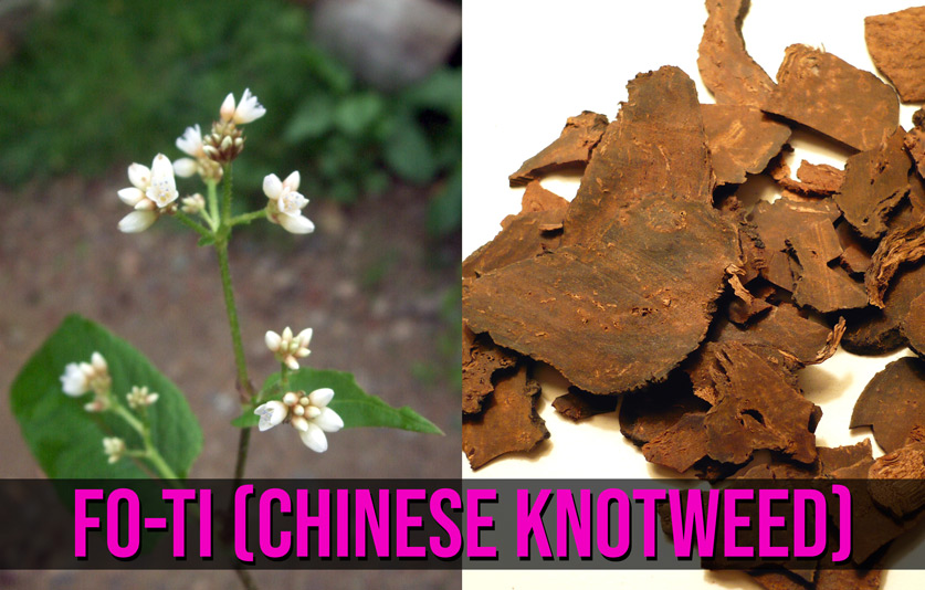 Chinese knotweed, or fo-ti - this cute little plant's roots (right) are dried and milled into a powder with tons of health benefits